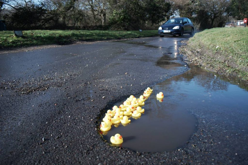 Duck in Pothole Index DIPI by Ashley Basil