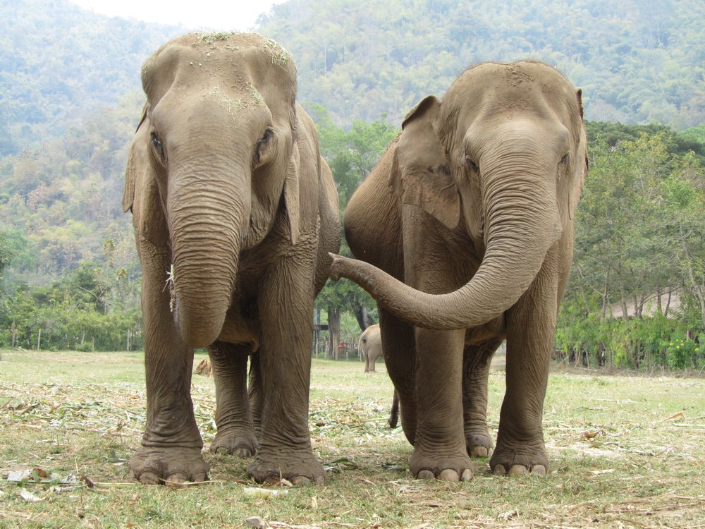 Elephant Haven offers elephants a place to retire, resocialise and rehabilitate.