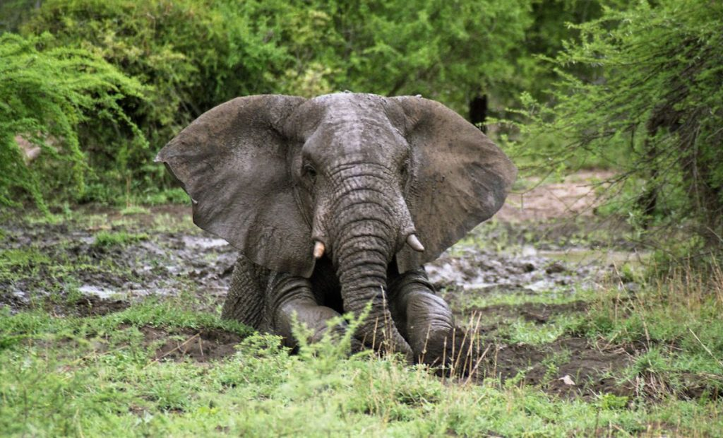 A new lease of life for Europe's elephants and a Hitachi excavator