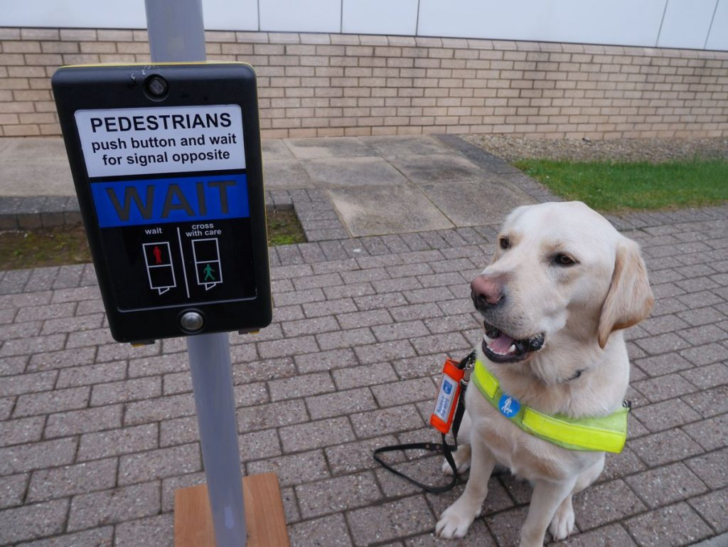 Guide Dog Sid learning to use the junction control box