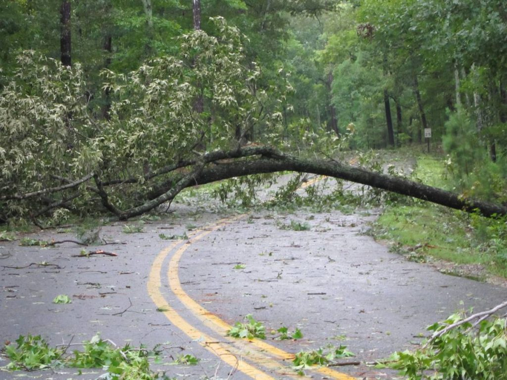 Hurricane Damage - Photo by Virginia State Parks