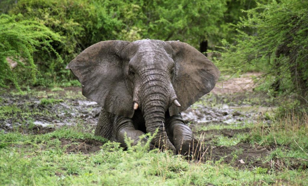 Hitachi donates mini-excavator to elephant conservation project
