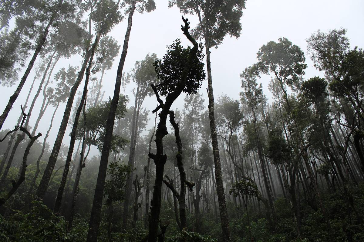 Envirobuild aims to protect over 40,000 acres of rainforest through Rainforest Donations