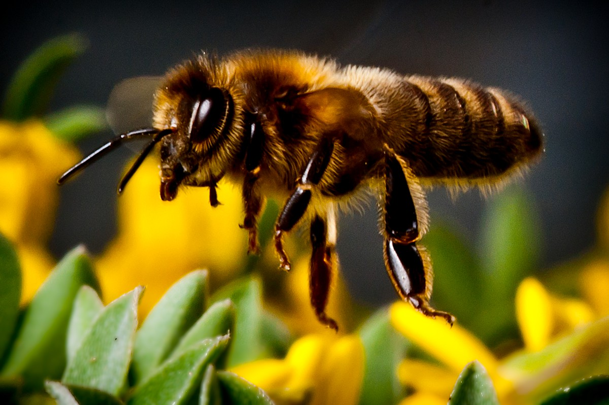 Green light for wildlife project which puts Cumbria's Bees on the road to recovery