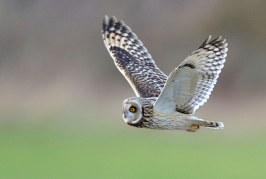 The Wildlife Trusts host the first ever Big Wild Weekend