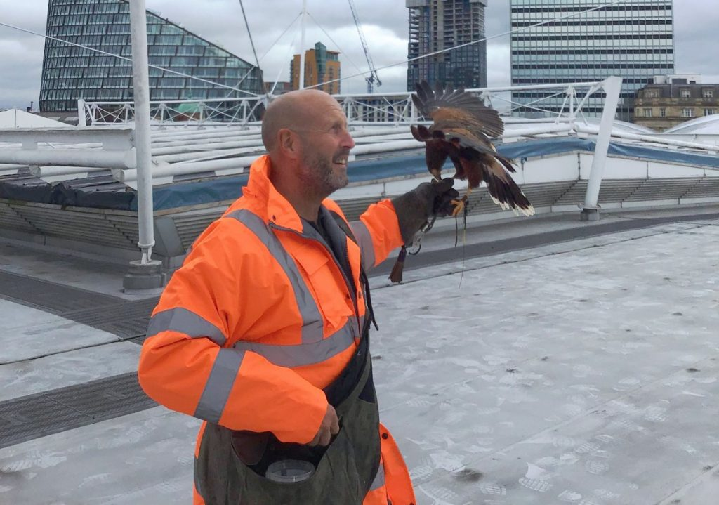 Network Rail hires Hawk to scare off roof-pecking squatters