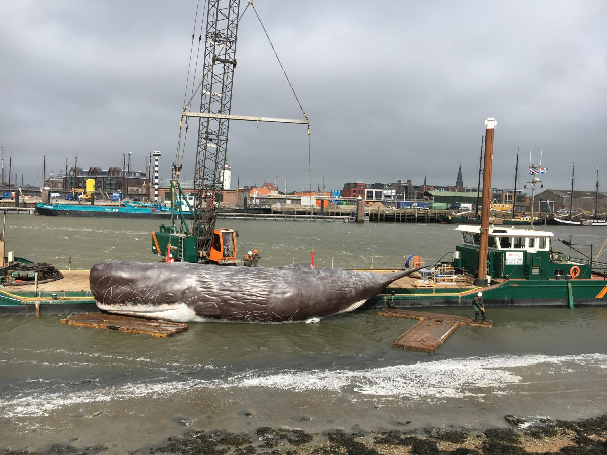 11fountains Sperm Whale launched by SENNEBOGEN crawler crane
