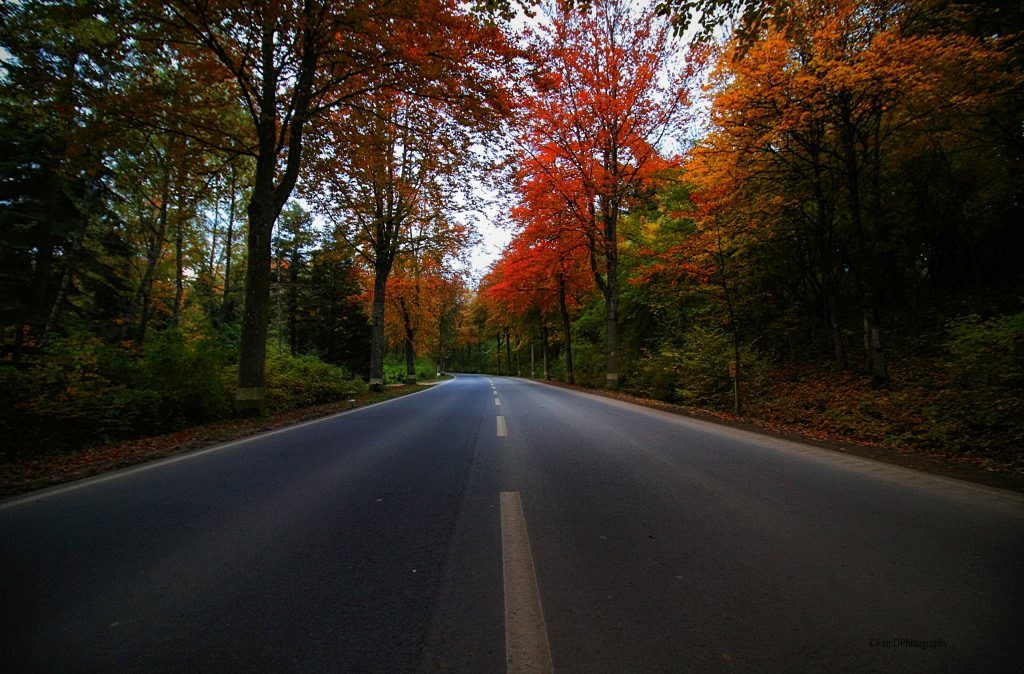 Autumn Road - Photo by Fan D