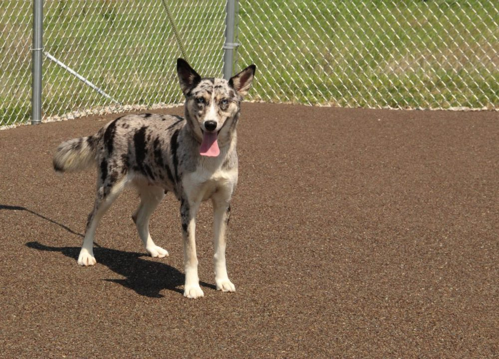 Indiana animal shelter completed with PorousPave dog exercise areas