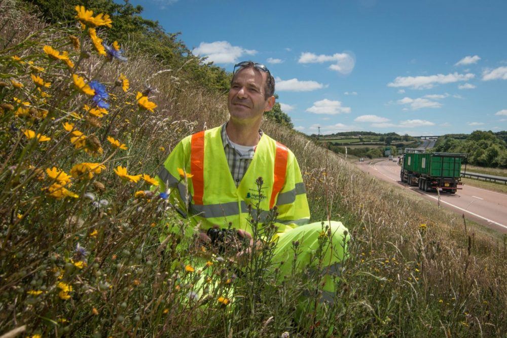 Highways England helps to Get Cumbria Buzzing to make A roads bee friendly