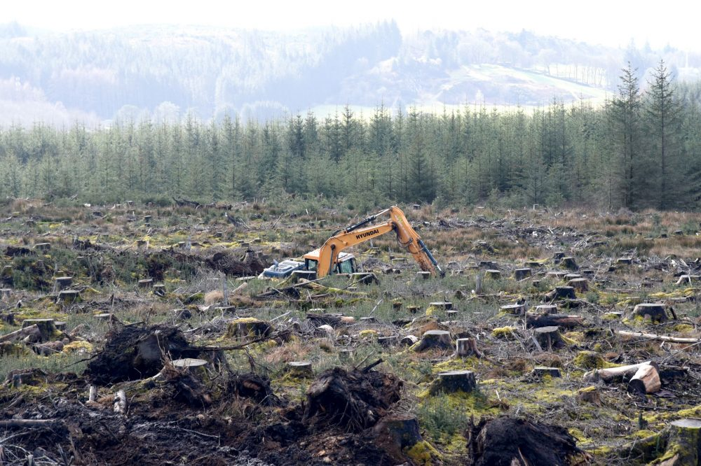 Hyundai High-Walkers perfect for tough forestry tasks and for Carron Valley Plant
