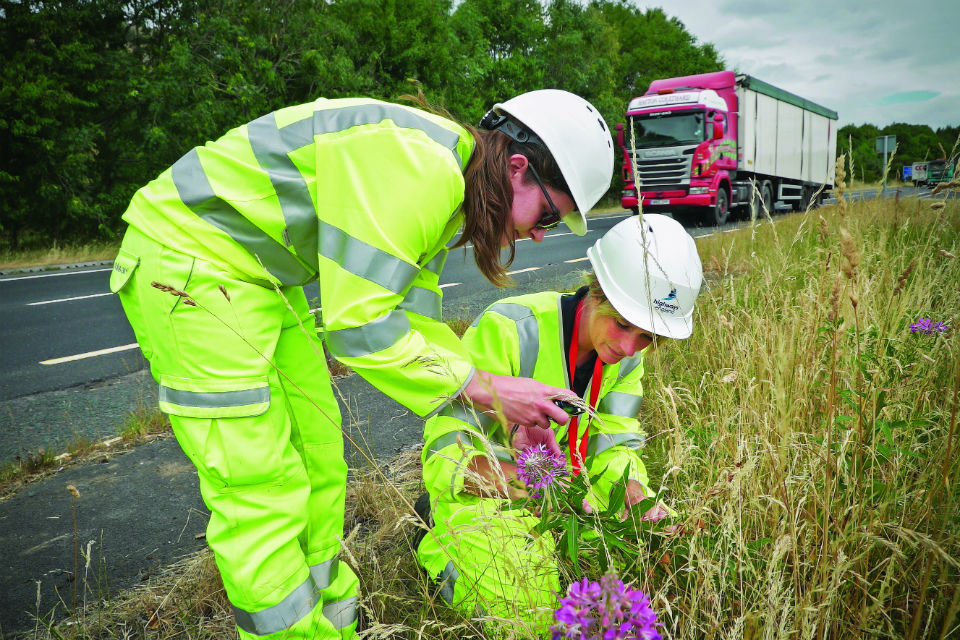 An investment in biodiversity along the region's major A roads and motorways is helping to boost native plant and wildlife..