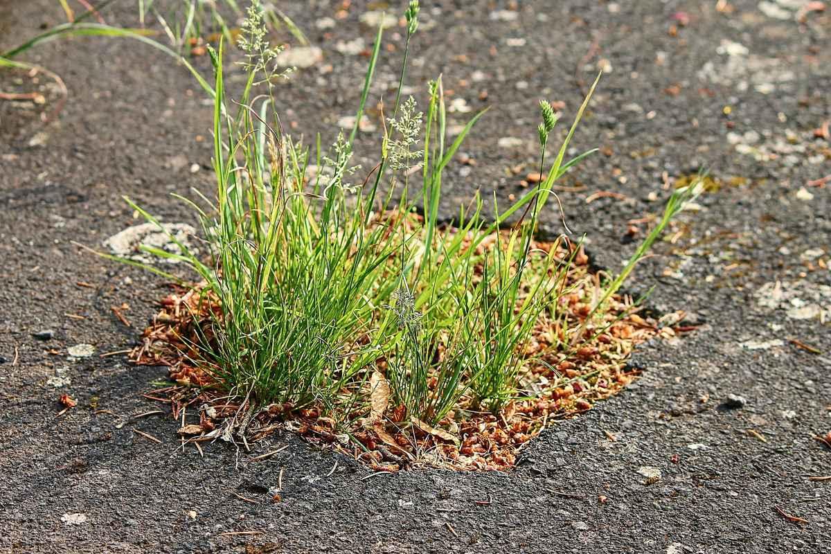 UK Councils spent £99 million to fix UK potholes in 2020