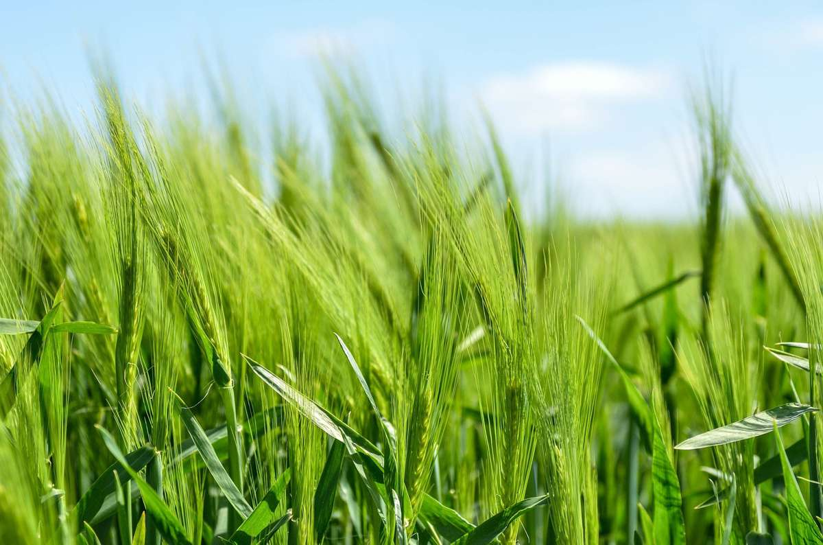 Monnit launches IoT Soil Moisture Sensor to create Smart Agriculture