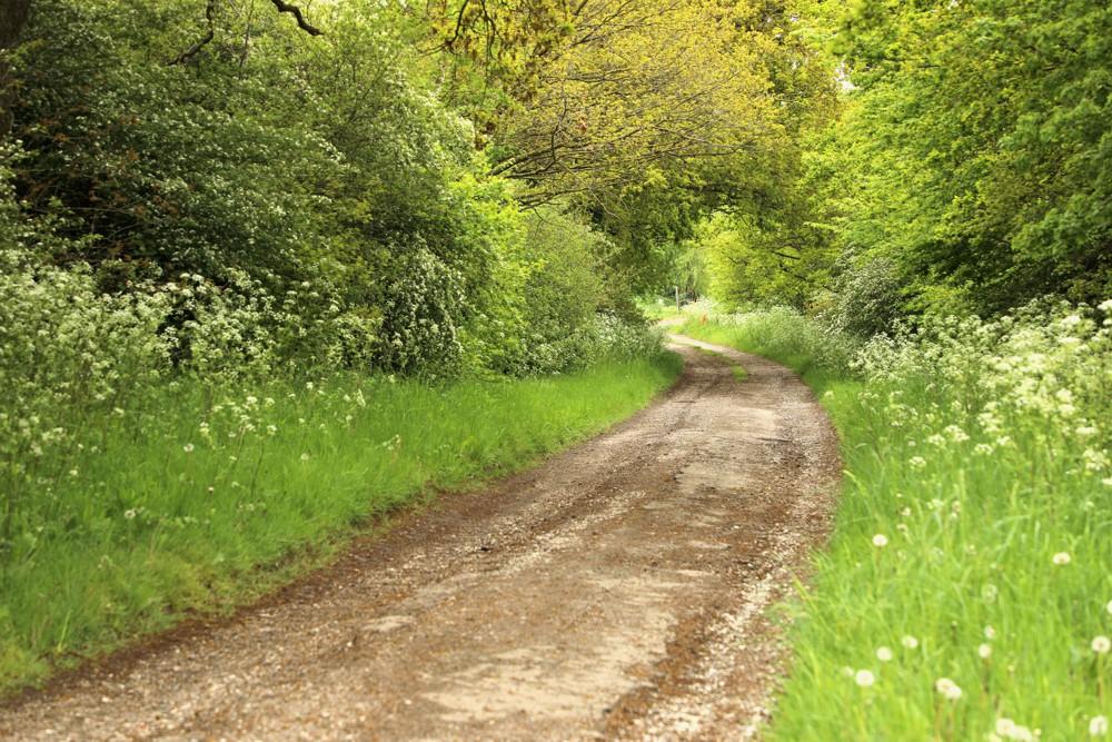 Highways England to create largest community woodland alongside Lower Thames Crossing
