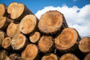 Timber specialist Adera adopts Procore Construction Management Platform