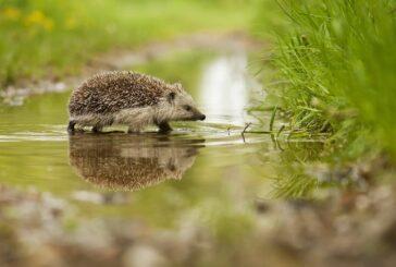 ACO Webinar series focuses on tackling Habitat Destruction
