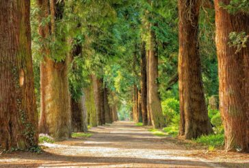 Treescapes programme explores how trees and woodlands can help reach Net Zero